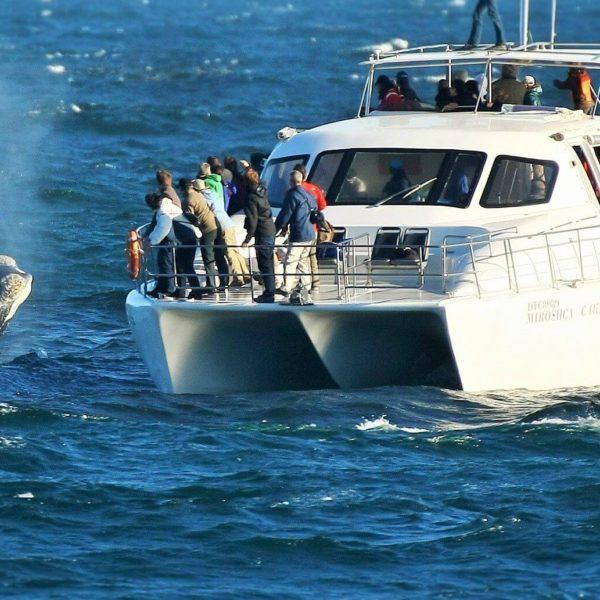 Walvis kort bij boot
