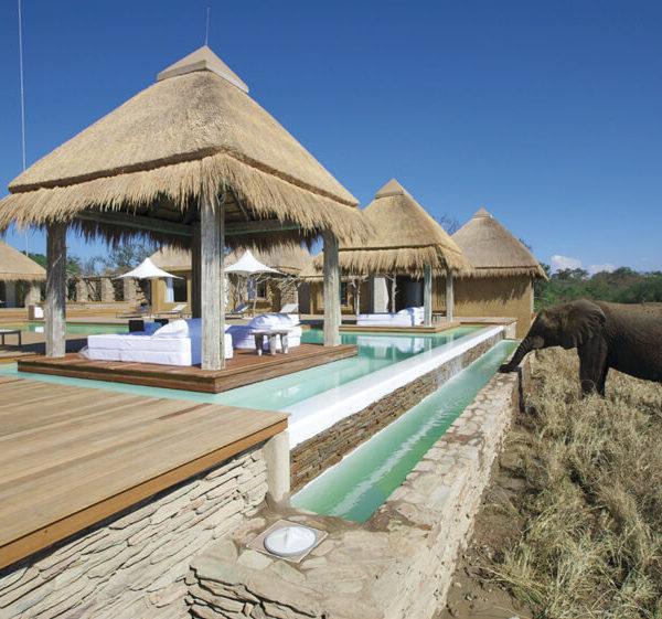 Olifant bij zwembad Kapama River Lodge