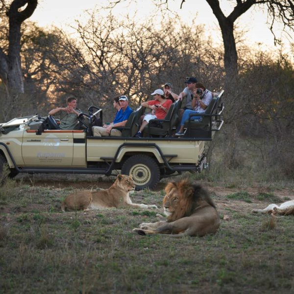Toeristen nemen een foto van 3 leeuwen