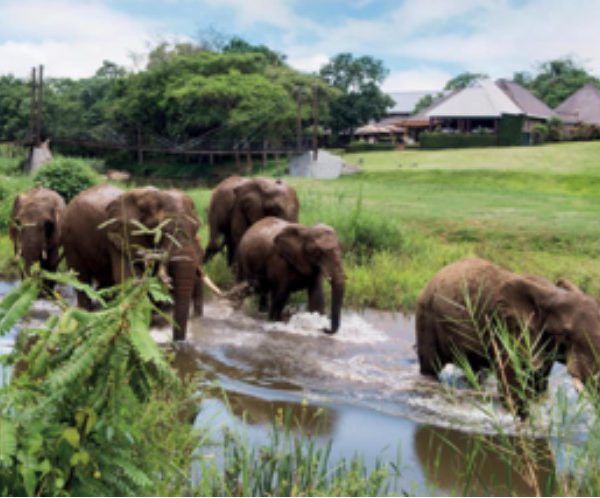 Olifanten lopen door een rivier