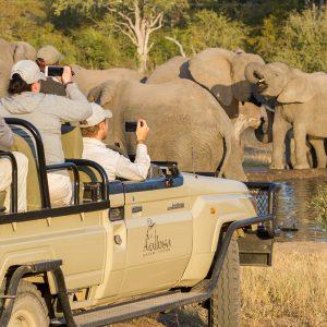 Arathusa Jeep Elephants